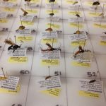Pinned insect specimen box.