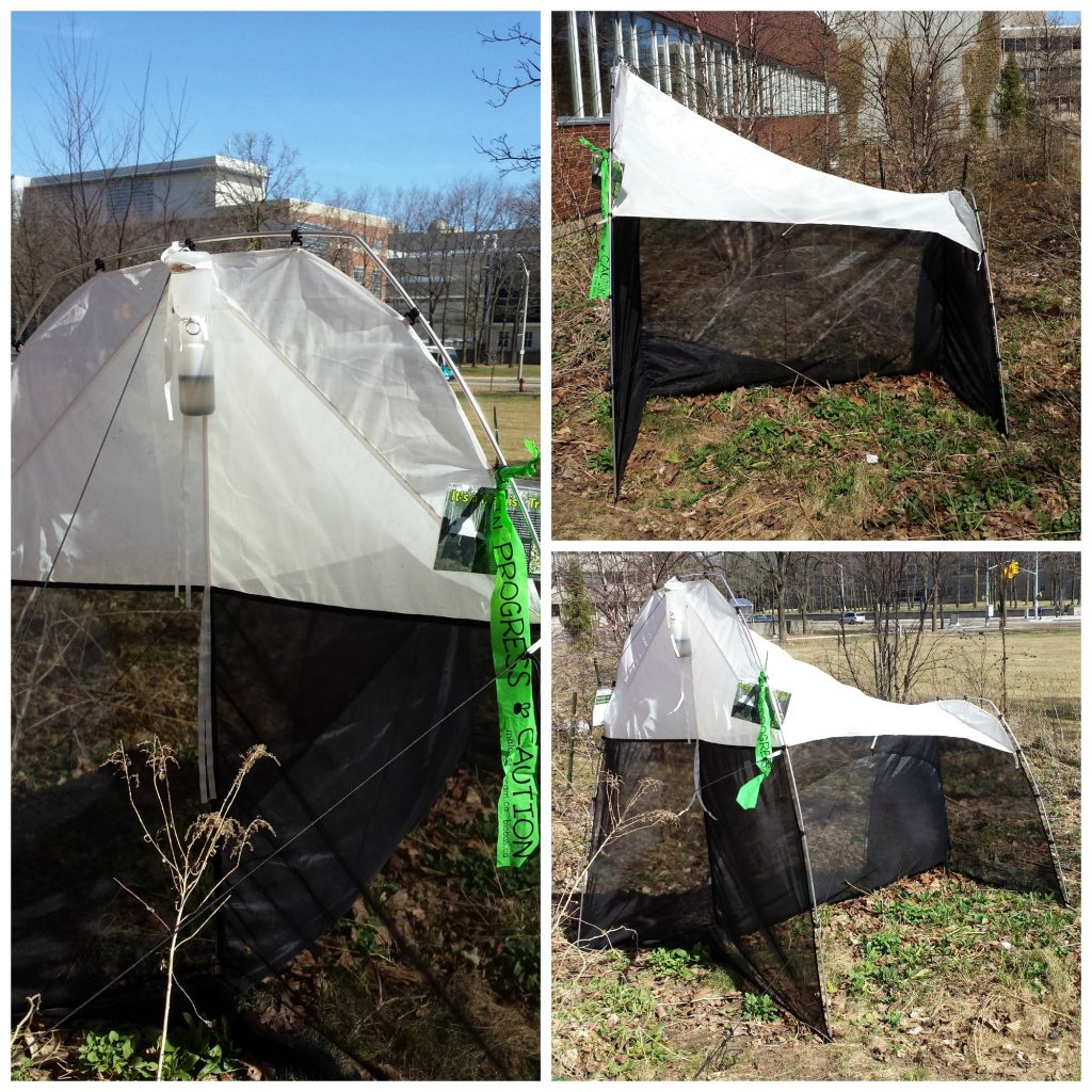 Malaise Trap at BIO (April, 2015)